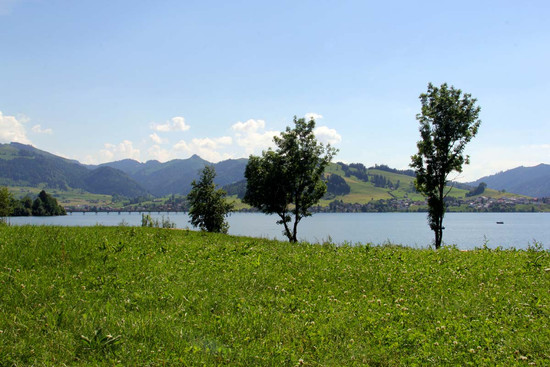 Trees by the Sihlsee